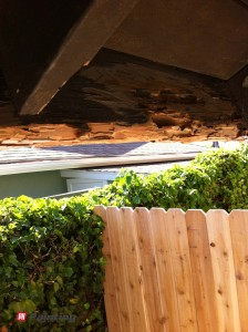 excessive termite damage everywhere
